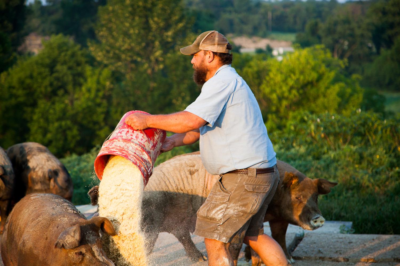 Todd Geisert feeding his hogs