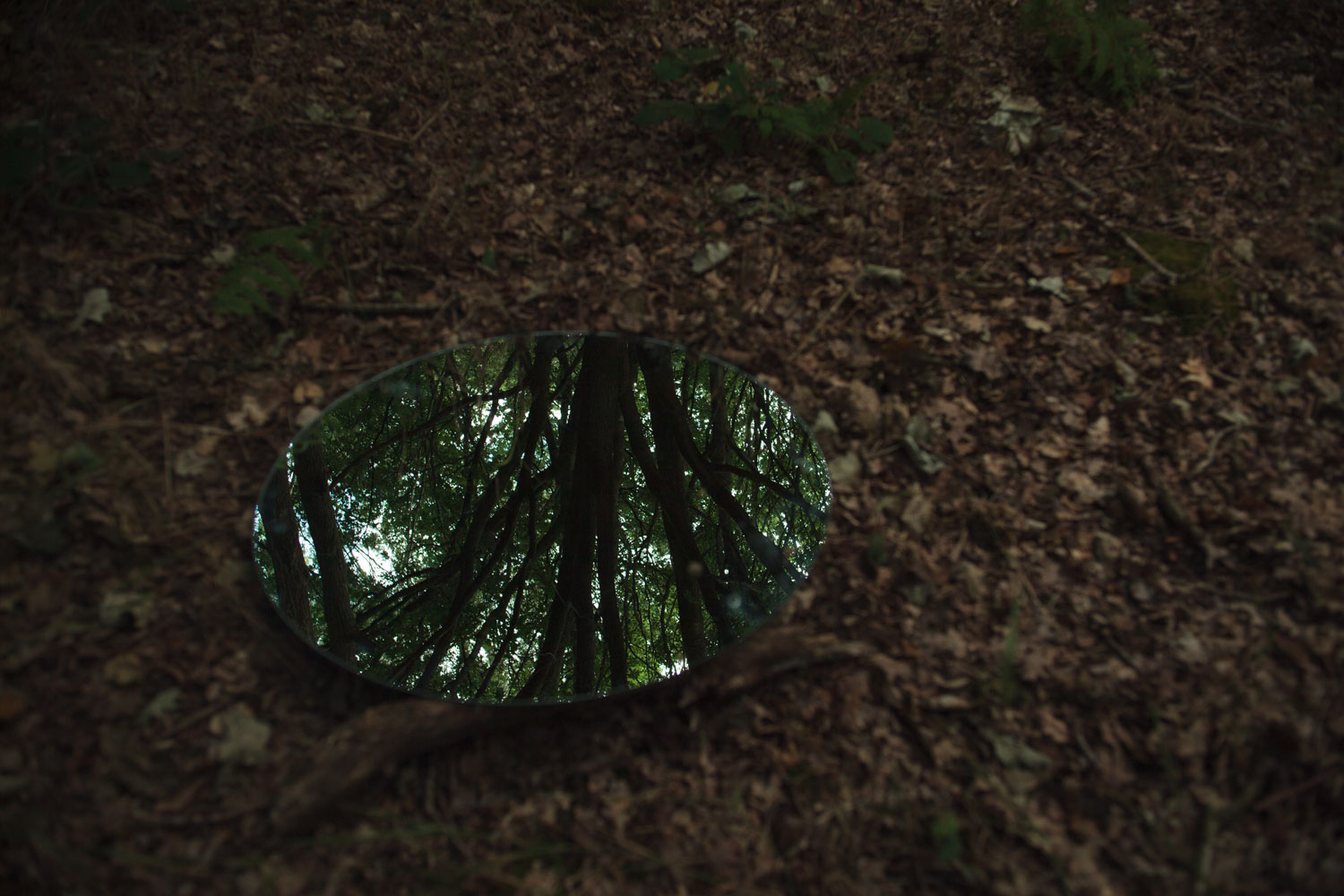 Video still of a mirror on the ground of a forrest floor.