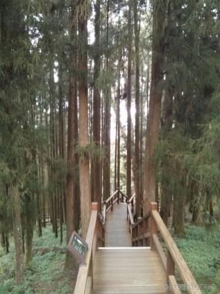 Alishan - mountain trail 3