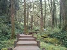 Alishan - mountain trail 4