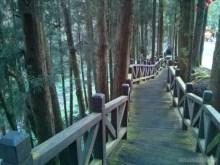 Alishan - mountain trail 8