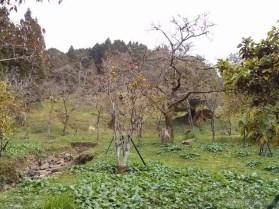 Alishan - scenery 3