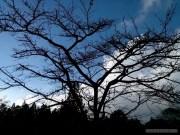 Alishan - scenery 5