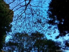 Alishan - scenery 7