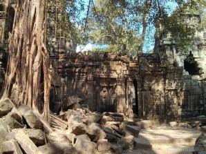 Angkor Archaeological Park - Ta Prohm 10