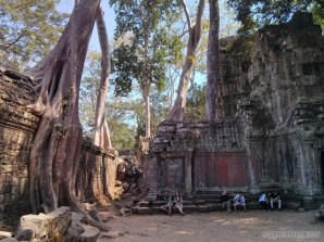 Angkor Archaeological Park - Ta Prohm 14