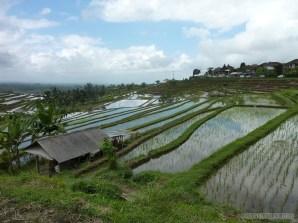 Balinese rice terraces - scenery 12