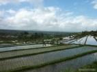 Balinese rice terraces - scenery 13