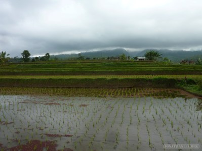 Balinese rice terraces - scenery 17