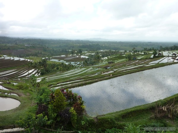 Balinese rice terraces - scenery 18