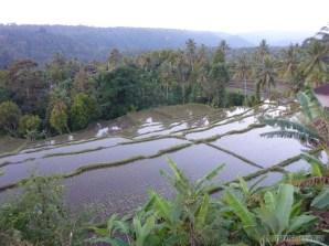 Balinese rice terraces - scenery 19