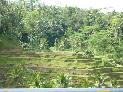 Balinese rice terraces - scenery 20