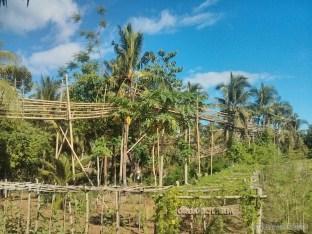 Bohol - Coco farm hostel bamboo skywalk 1