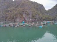 Cat Ba - Halong Bay tour fish farm 2