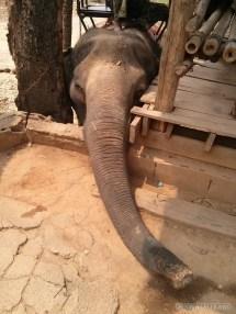 Chiang Mai trekking - elephant camp 2