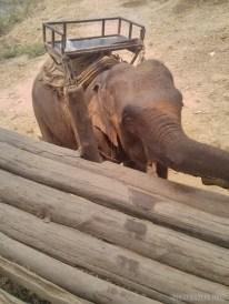 Chiang Mai trekking - elephant camp 7