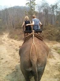 Chiang Mai trekking - elephant riding 4