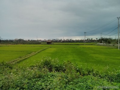Hoi An - biking rice fields 3