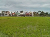 Hoi An - biking rice fields 4