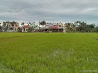 Hoi An - biking rice fields 4