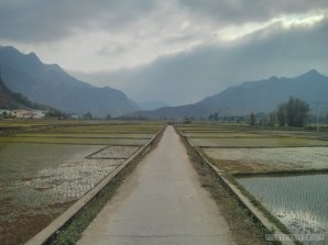 Mai Chau - rice fields 10