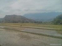 Mai Chau - rice fields 3