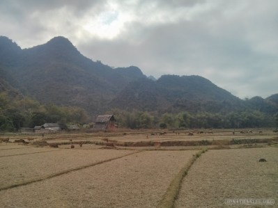 Mai Chau - rice fields 5