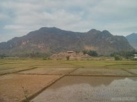 Mai Chau - rice fields 6