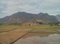 Mai Chau - rice fields 6