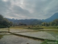 Mai Chau - rice fields 8