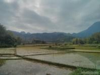 Mai Chau - rice fields 8
