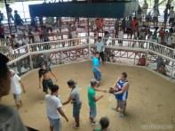 Moalboal - cockfighting 3