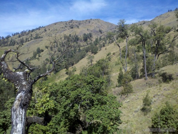Mount Rinjani - first day scenery 3