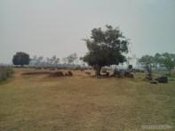 Phonsavan - Field of Jars landscape 2