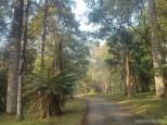 Pyin U Lwin - National Kandawgyi Gardens 12