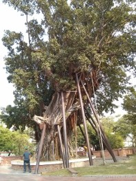 Tainan - supported tree 2
