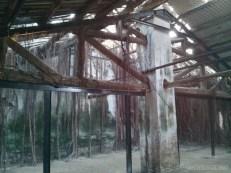 Tainan - tree house 2