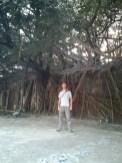 Tainan - tree house portrait