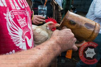 Ric Allen giving Phall the hen a bit of light refreshment