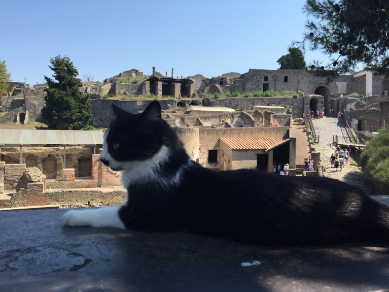 Read more about the article Day 5 – Sorrento and Pompeii