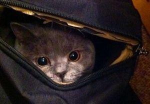 lucy-cat1