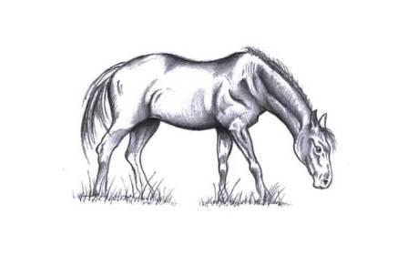 horse.jpg?fit=800%2C500