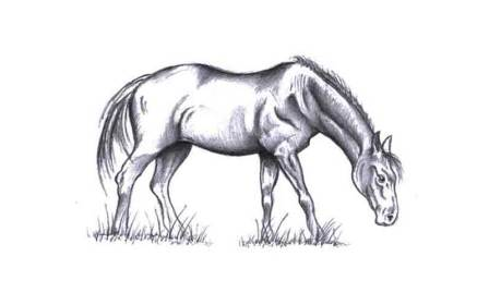 horse.jpg?fit=800%2C500&ssl=1