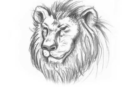 lion.jpg?fit=800%2C500