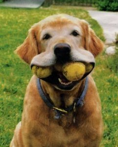 dogwithballs