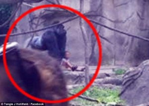 many seek justice for harambe after gorilla is killed to protect