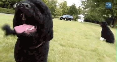 """Obama """"First Dog"""" Bites Visitor In White House 