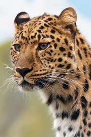 cheetah-19621_1280.jpg