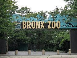 250px-stavenn_bronx_zoo_00