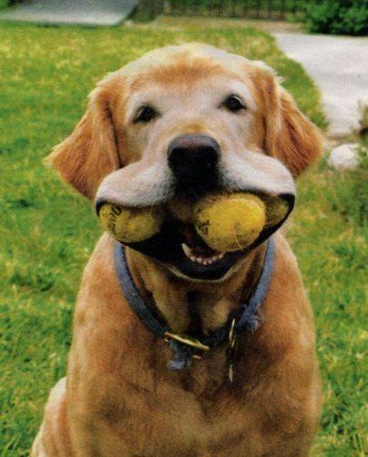 dogwithballs